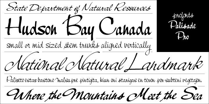 Palisade Pro is a very elegant script family by profonts studio. Each of the eight weights contains approximately 1000 characters. The character range includes the complete Latin layout for Western and Eastern Europe, including the Baltic states, Romania and Turkey. Moreover, the character set contains a large selection of ligatures and alternates, which make this attractive script perfect for OTF-enabled applications.